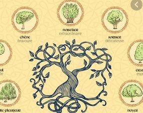 astrologie-celtique-livre.JPG